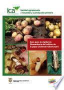 Guía para la vigilancia fitosanitaria del cultivo de la papa (Solanum tuberosum)