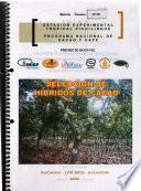 Seleccion De Hibridos De Cacao